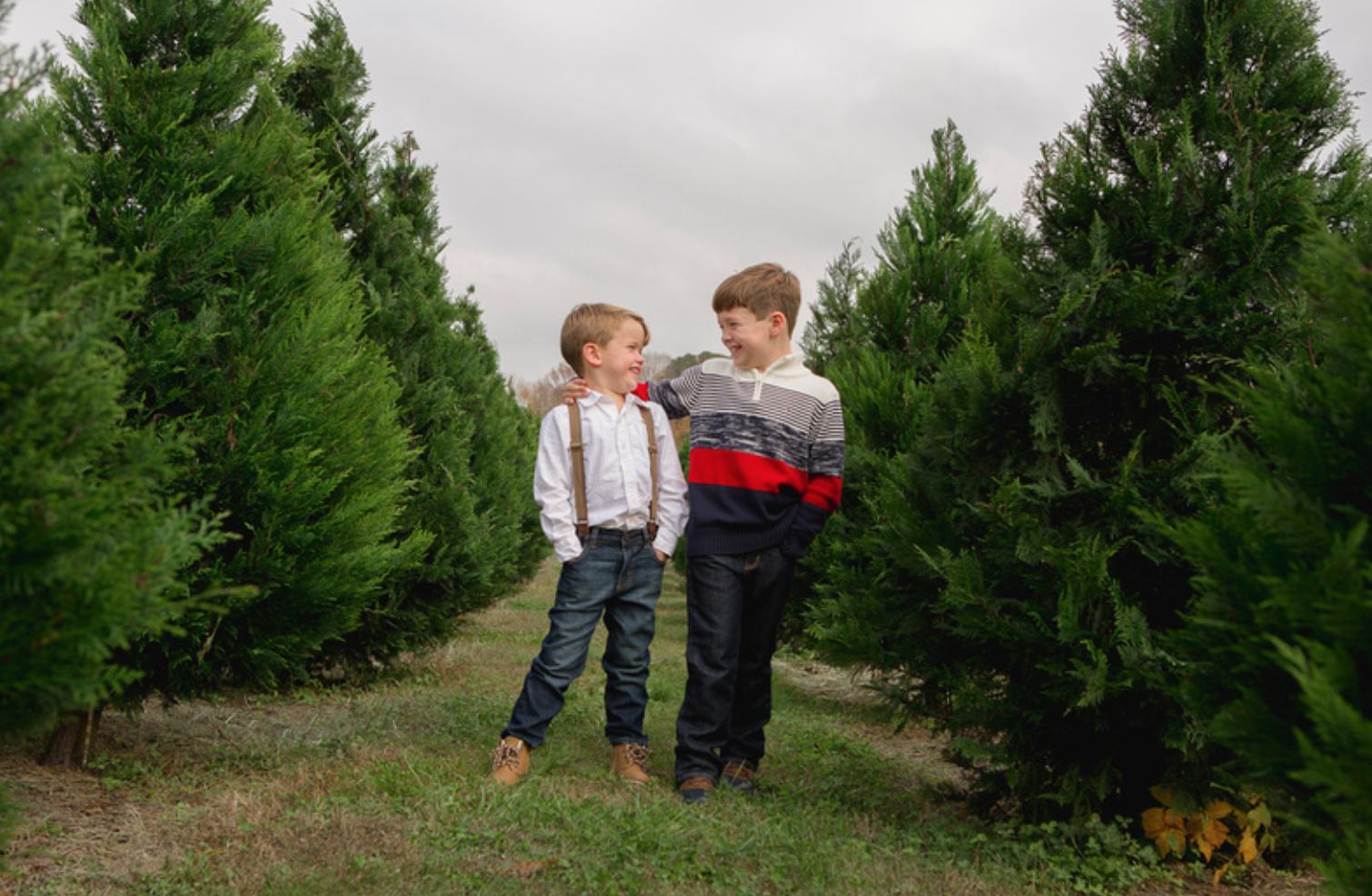 Christmas Tree Farms In Georgia.52 Weekly Adventures Archives 52 Forsyth