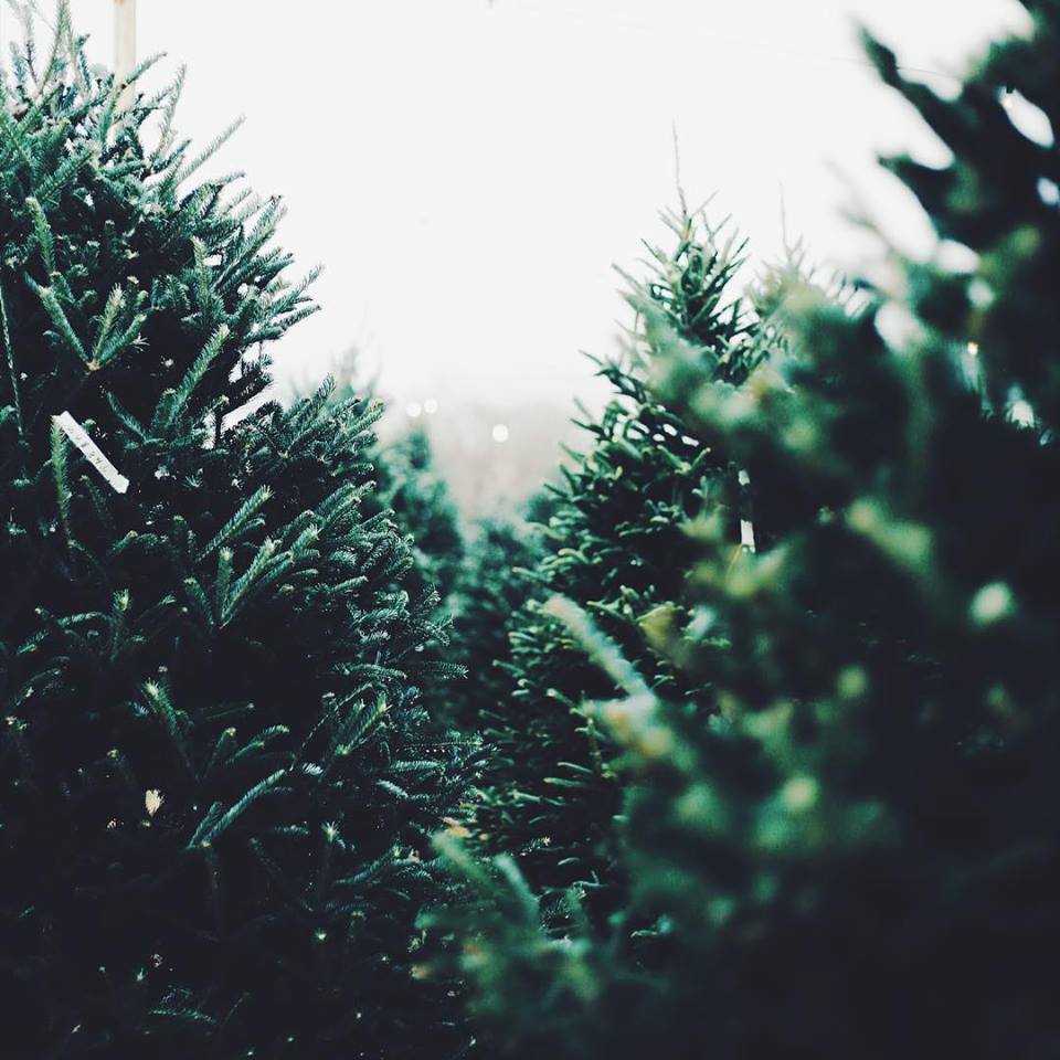 Does Lowes Sell Christmas Trees: 5 Christmas Tree Farms In And Around Forsyth
